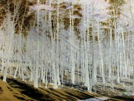 Negative Trees 1 by vbcsgtscud