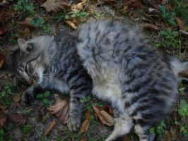 Kitteh in the Autumn Leaves by Horsesnhurricanes