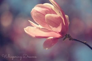 Delicate by bridgetbright