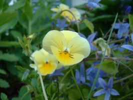 yellower flower by taomatsu