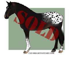 Horse Adoptable: Irish Draught by Cat-Orb-Shop