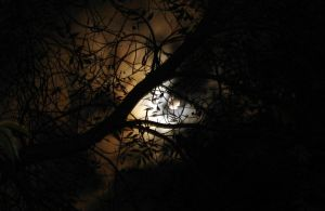 Full Moon through Branches by MorganCG