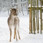 Beauty of a Doe by Chiron178