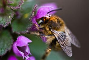 Bee by ervin21