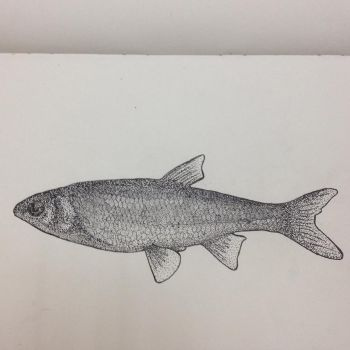Fish-Stippling by Swordaive