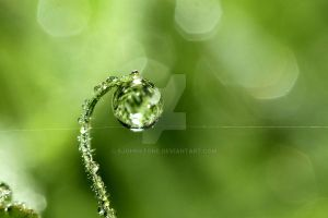 Early Morning Dew by SJohnstone
