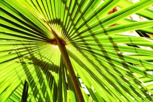 Palm fronds at Pearl Beach 1 by wildplaces