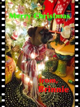 Brinnie say Merry Christmas by surreal32