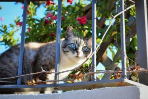 Blue eyed cat by EverestPhoto