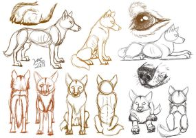 Dog - Dingo body sketches by WolfScribe