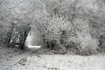 winterland 26 by priesteres-stock