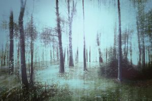 Forest 8 by Amalus