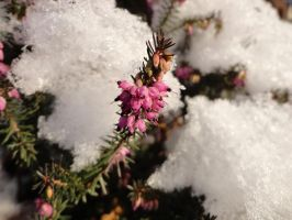 Springtime Colours in the Snow by Kirstinfae