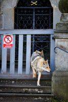 No Entry by Czertice