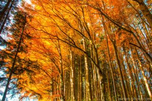 Burning Autumn by brijome