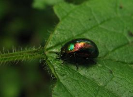 Little colorful bug by DeingeL