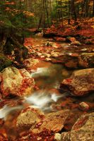 Forest Stream by Celem