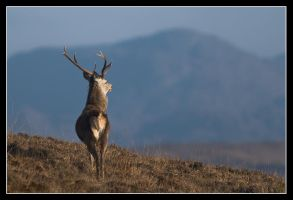 King of his land by MessiahKhan