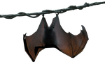 Hanging Bat by TheStockWarehouse