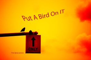 Put A Bird On It by dislexicpalindrome
