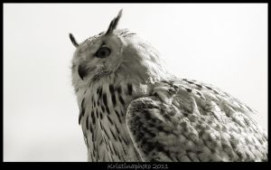 Black and white owl 1 by Kristinaphoto