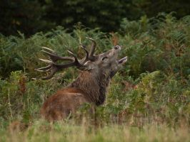 Red Deer 03 - Sept 10 by mszafran