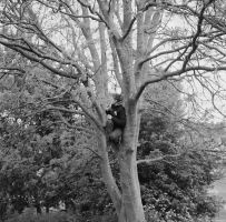Decem - Ilford - up a tree by Picture-Bandit