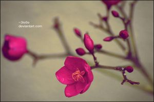 :+: A SimPLe fLoWer .. :+: by 3lo0o