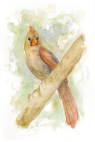 Female Cardinal by matildarose
