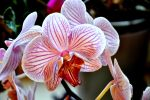 OrChiD at HoMe by Fre-D