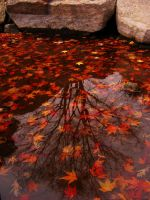 tree reflex and red leafs by rockmylife