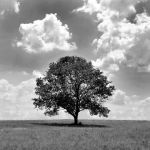 Lonely tree by SarahVlad