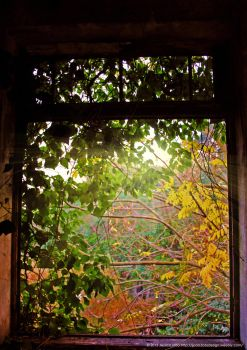 Window to Nature by JWabbit
