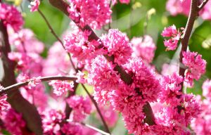 Clusters of pink by MagicCometART