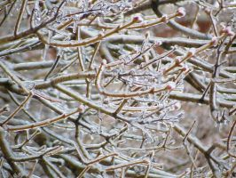 Frozen Branches by Kitteh-Pawz