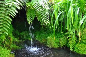 The Pool In The Fernery by Forestina-Fotos