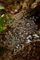Water Drops on a Spider Web by Silver242