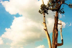 Tree and Cloud by shera00