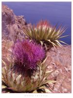Greek Thistle by toxicdesign