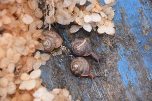 Snails by Philosopher-Vinni