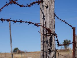 Barbed Wire Fence by alexisw