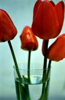 Tulips 1 2004 by Kitsch1984