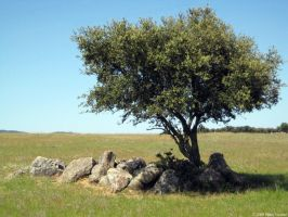 Tree in Portugal Alentejo by zerplon