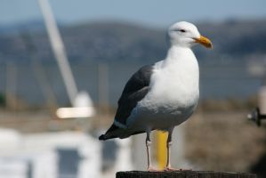Seagull by Dr-J-Zoidberg