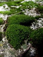 moss stock 02 by hp-abrasion
