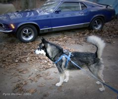 We love big dogs and fast cars by pyro-helfier