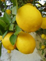 .:stock - lemon 2:. by guavon-stock
