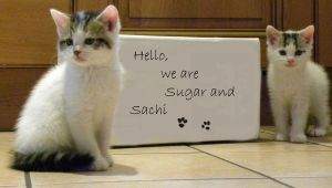 Hello we are Sugar and Sachi by Buble