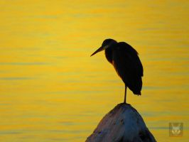Heron Meditating On Sunset by wolfwings1
