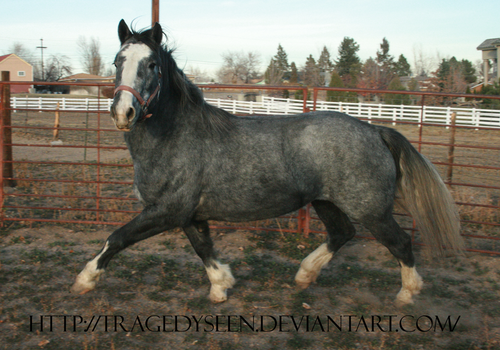 Blue Roan Stock 85 by tragedyseen